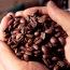 爪哇咖啡又稱做老爪哇,原因是咖啡豆運送至紐約的漫長旅途中,水氣自然散出,使咖啡豆在紐約得到好 […]