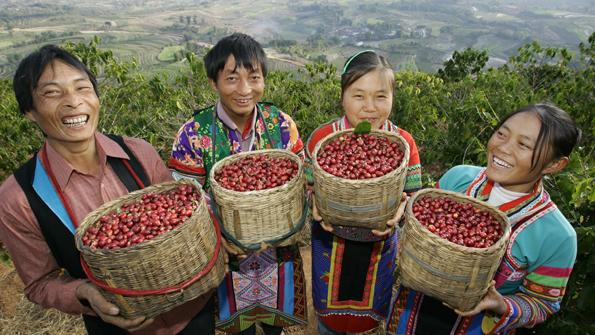 China Yunna Coffee 3