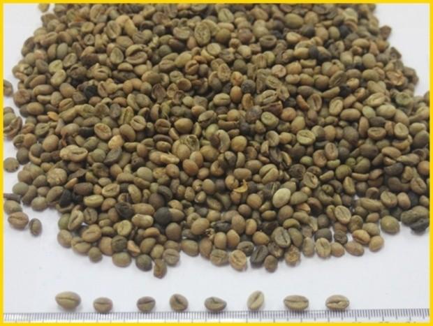 China Yunna Coffee 4