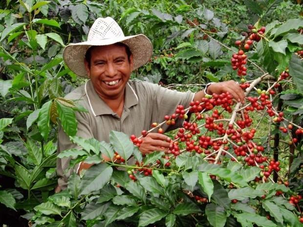 Huehuetenango coffee 2