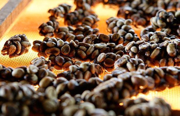 Luwak coffee 3