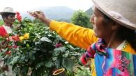 後起之秀,急起直追,那豐富的香氣與細膩的口感是令人忘不了的美麗時刻。 產  地:祕魯。