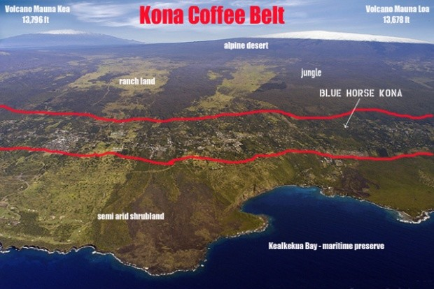 coffee KONA 2