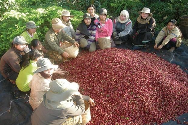 Laos Coffee 3