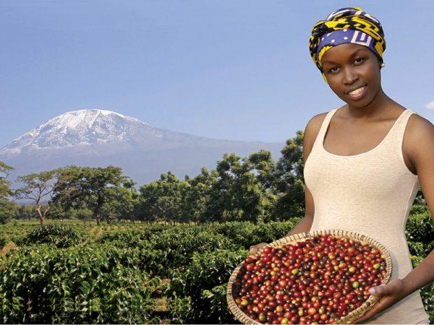 Kilimanjaro coffee 3