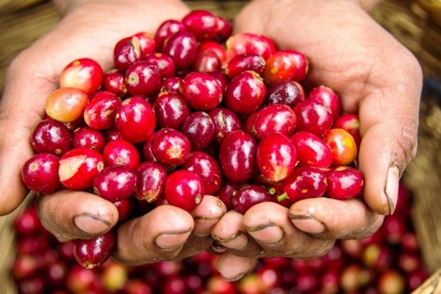 咖啡果的處理方式